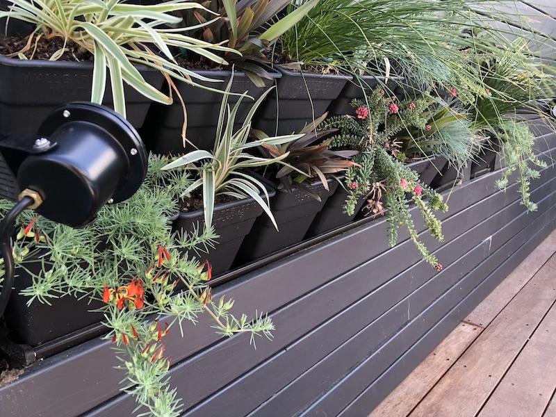 Small spaces wall garden ideas