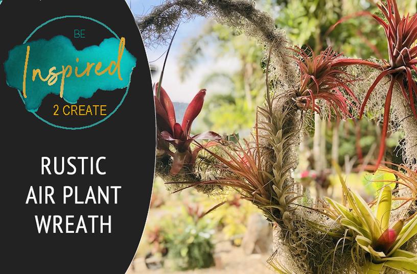 Learn how to make an Air-plant Wreath